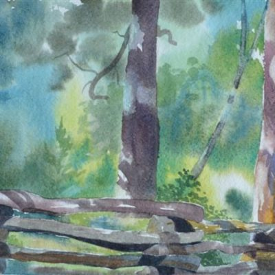 "Sharyn Fogel Watercolor ""Coon Tree"""